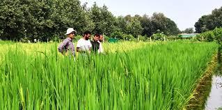 यूपी कॉलेज के कृषि स्नातकों को नहीं मिलेगा पीजी में दाखिला,✅ आईसीएआर ने बढ़ाई छात्रों की परेशानी